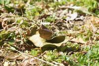 越冬蝶も目覚める - おらんくの自然満喫