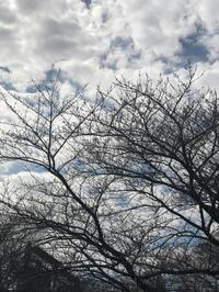 遠目にも  咲く日を待つや  桜樹かな - Pushpin Diary(L.J.Style Book)
