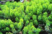 苔の緑 - 晴れ時々そよ風