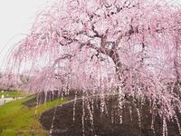 春の流れにモゾモゾ - Tomorrow is another day    ~明日に希望を~