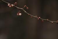 春の足音 - Mineral's&Cameraの日記