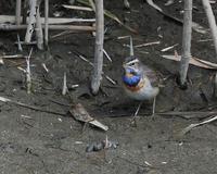 長期!!滞在中・・・・ - 季節の鳥達
