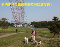 ブリちゃん家の新人くん♪ - もももの部屋(怖がりで攻撃性の高い秋田犬のタイガ、老犬雑種のベスの共同生活&保護活動の記録です・・・時々お空のモカも登場!)