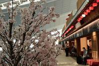 羽田空港国際線ターミナル~第1ターミナル - 素顔のままで
