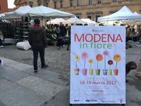 MODENA in fiore 🌼🌸🌼 モデナの花市 - ITALIA Happy Life イタリア ハッピー ライフ  -Le ricette di Rie-