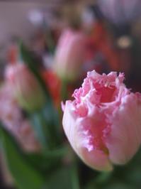 ねびまさりけり(春分) - ポケットに季節の手帖