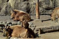 登頂 - 動物園へ行こう