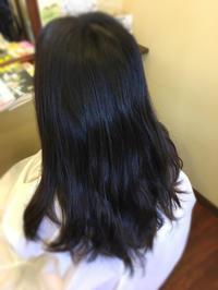 黒髪からブルーアッシュで春らしいー透明感 - 観音寺市 美容室 accha