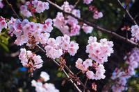 sakura - Happy photo gallery Ⅱ