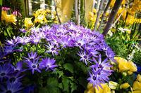 デンパークで花✿花 - 感動模写Ⅱ