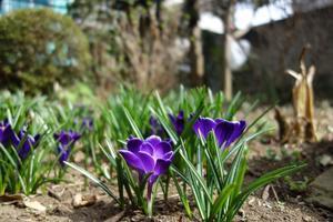 なんだか春が近づいてるようです。 - とりまくモノ