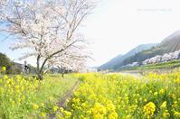 「虹いろカメラさんぽ 2017春〜桜と駅舎編〜」参加者募集。 - 虹のいろ