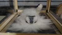 ペキニーズゴン太その2(納品という名の押しつけ) - 羊毛フェルト男(羊毛フェルトマン)
