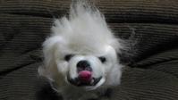 ペキニーズゴン太その3 - 羊毛フェルト男(羊毛フェルトマン)