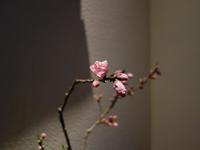 花の季節到来 - 花、書、音楽、旅、人、、、日常で出会う美しごとを