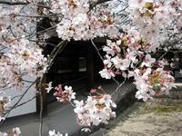 春・桜の季節、わたしとインスタグラム - イタリア写真草子 Fotoblog da Perugia