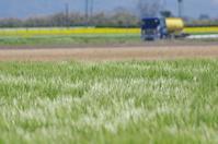 麦の穂波 - いつかみたソラ