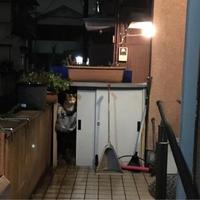 雨宿り - ぶつぶつ独り言2(うちの猫ら2018)