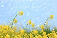 春の光♪ - happy-cafe*vol.2