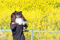 春爛漫お花見散歩 - にゃんてワンダホー!