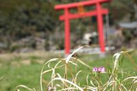 春 - 気ままに写生活