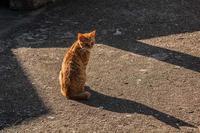 路地の陽だまり - 爺の街角徘徊記録