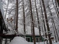 昨夜から今朝にかけ雪、昼から晴れ・・そして、ついに屋根から落雪! - 十勝・中札内村「森の中の日記」~café&宿カンタベリー~