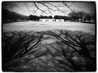 公園 - 空を見上げて