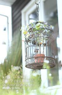 カメラが恋する鎌倉:寒空、鳥かごは空っぽ。 - さいとうおりのおいしいとかわいい