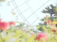 万博、夏の花八景からの景色 - photomo