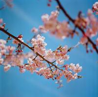 春 - DeeDeeのこと
