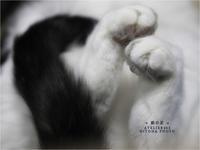 + 猫の足 + - 君に届け