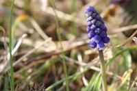 春分が過ぎ…:東京では早くも桜の開花宣言 - 週刊「目指せ自然農で自給自足」