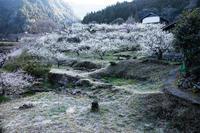 梅の里川売001 - 感動模写Ⅱ