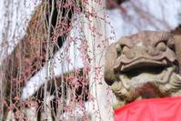 氷室神社の早咲き桜 2 - TAKE IT EASY