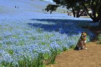 春~初夏、花撮影の計画 - 想い出