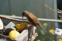 庭の餌台は常連客が - おらんくの自然満喫