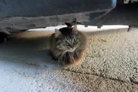 夏時間と猫かくれんぼ - イタリア写真草子 Fotoblog da Perugia
