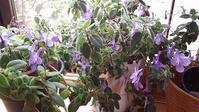 花が咲きました - 趣味の部屋0074