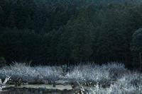 梅の里川売002 - 感動模写Ⅱ