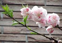 Easterを待つ 祈りの日曜日☆。。。♡☆.•*¨*•.¸¸♬十 - 代官山だより♪