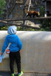 野毛山動物園と柳宗理デザイン散歩 - ~ハード系パン&世界の料理教室・ガストロノマードのTastyTravel~