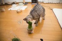 頂き物の猫草との違いは - にゃんず日記