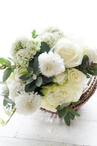 お花屋さんも喜ぶアイロニー花チョイス - お花に囲まれて