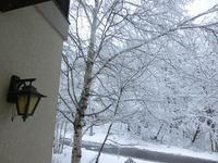 今朝も雪景色! - 風路のこぶちさわ日記