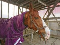 261鞍目体力の限界 - 美味しい時間と馬と犬