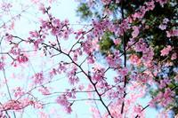続・櫻木神社 - ナオの*毎日が宝石箱*