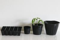 つぎつぎ植え替えると・・・・ - ぬるぅい畑生活