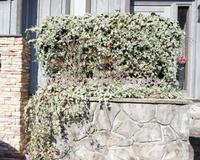 玄関花壇の植栽 - 花の庭づくり庭ぐらしガーデニングキララ
