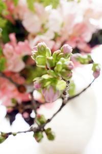 早く咲かないかなーぁ - お花に囲まれて